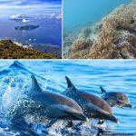 Travelling Seru ke Pulau Tidore